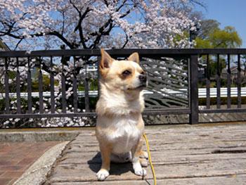 Sakurafinal