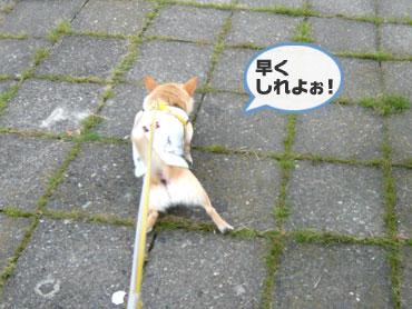Kaminari2_3