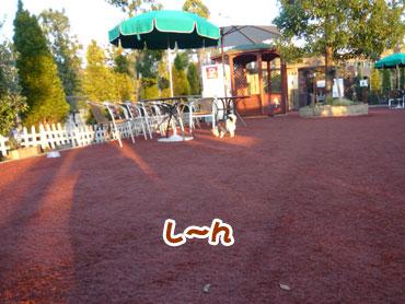 Chiwa5