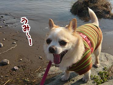 Tonegawa2